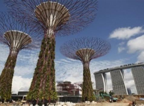 Singapore Tree Park